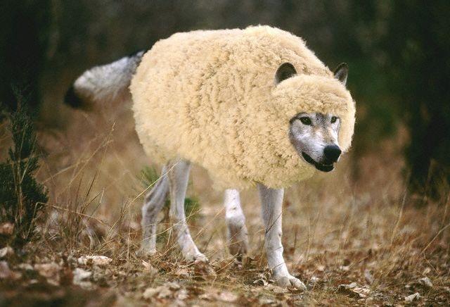 Orman Silvermist BellatriX Wolf-in-sheeps-clothing1